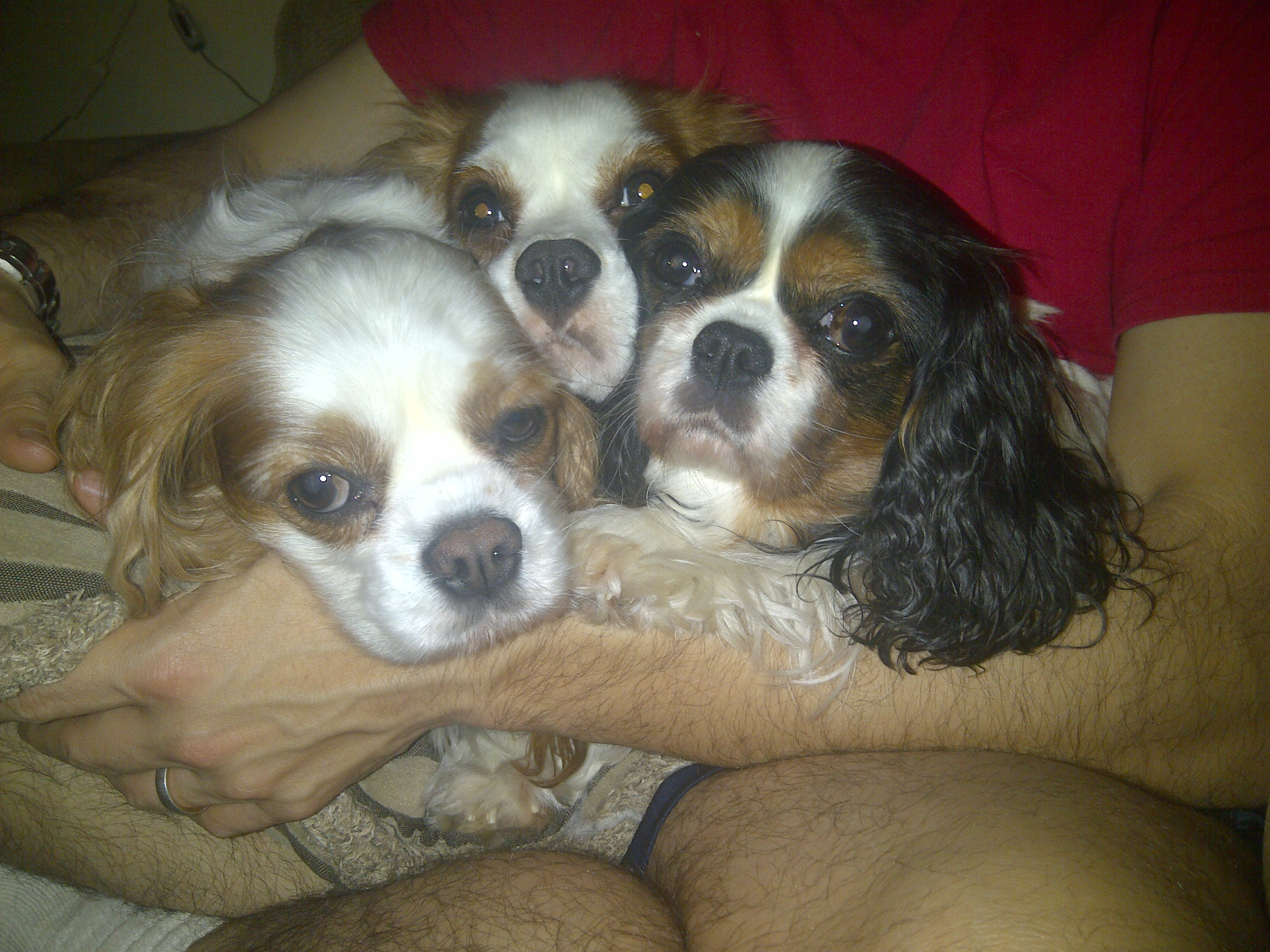 Gus, Sam (middle), and Daisy